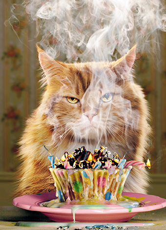 Cat with burning Birthday cake Claws and Paws Cards