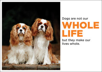 dogs-are-not-our-whole-life